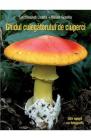 Ghidul culegatorului de ciuperci Locsmandi Csaba Vasas Gizella