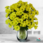 Buchet de 9 crizanteme galbene