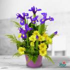 Aranjament floral Galben si violet